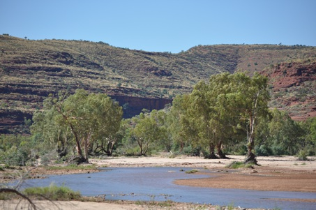 Palm Valley, Finke Gorge National Park, Australia, Alice Springs