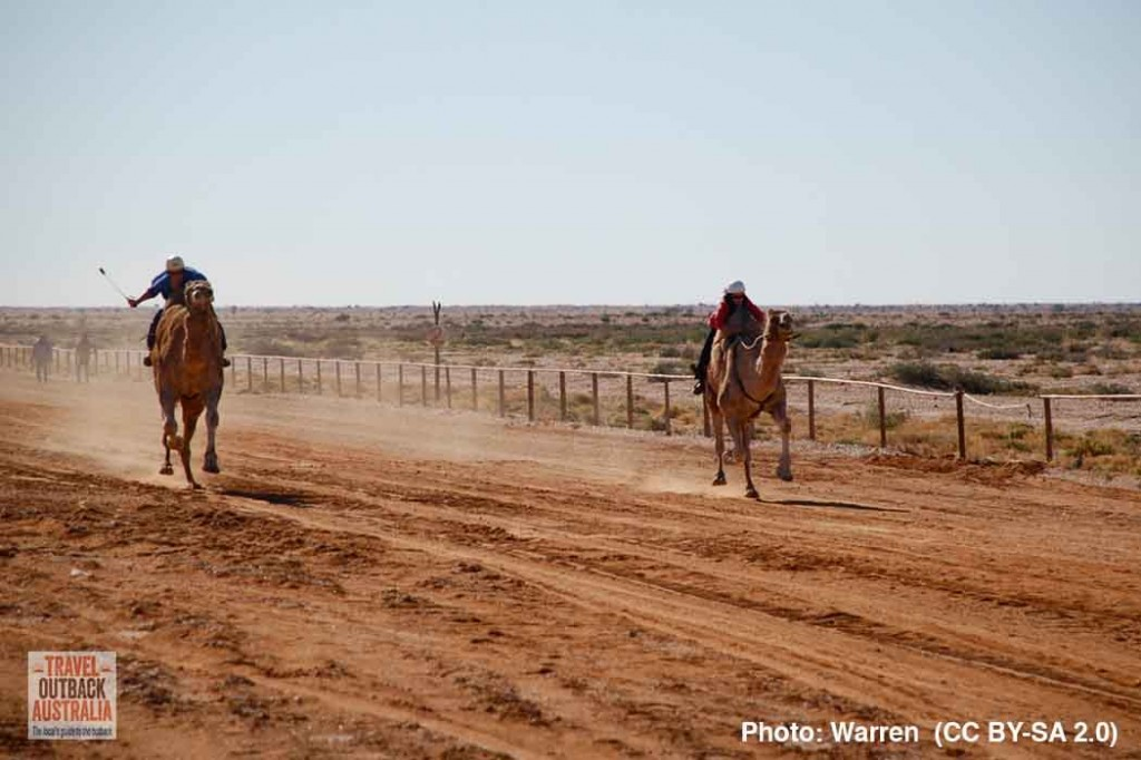 Marree Camel Races, South Australia
