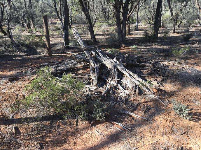 Nanya's Wurlie, Danggali Conservation Park, South Australia