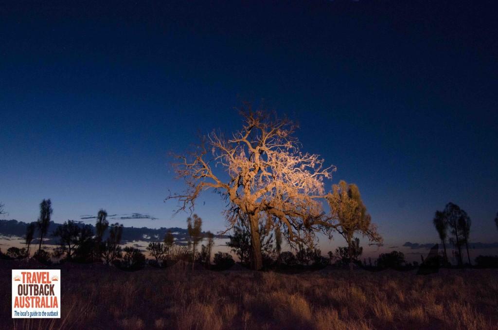 Desert-Oak-Watarrka